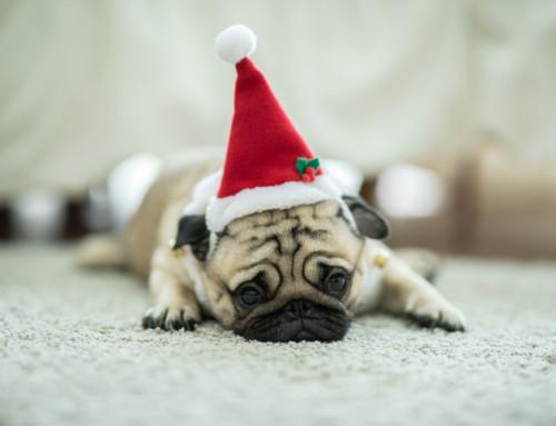 Best kept secret for beating Christmas Stress